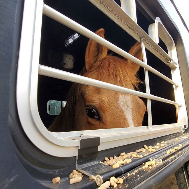 🐎 ☀ HAPPY TAILS ☀ 🐎 ⚖ JUSTICE ⚖ & ⚜️ K