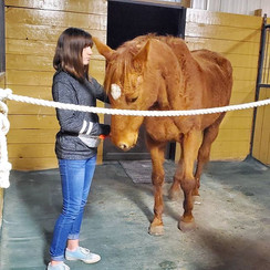 SKE client horse, Penny, has been gettin