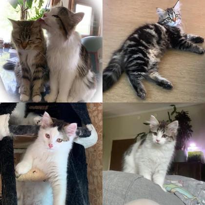 Vi har lediga kattungar!