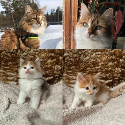 Vi har fortfarande kattungar!