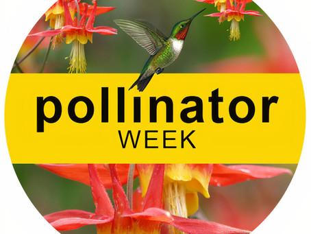 Celebrate National Pollinator Week