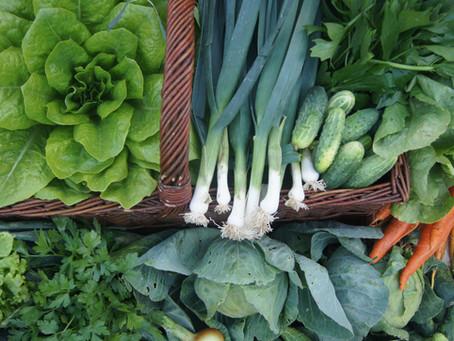 Jak w sposób ekologiczny chronić warzywa przed szkodnikami
