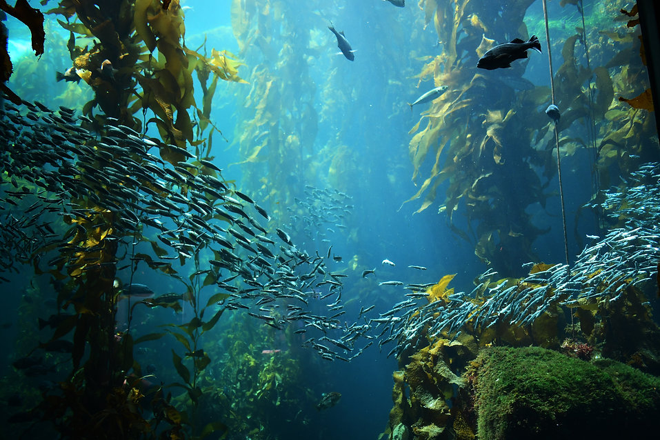 kelp forest imageshutterstock_1331702939
