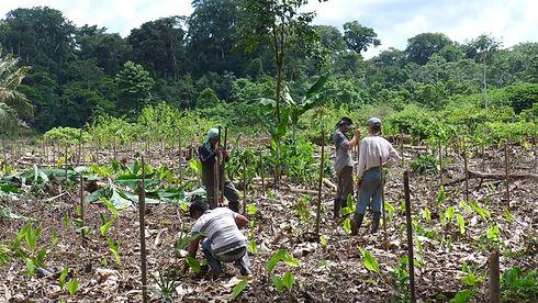 Peruvian Amazon.jpg