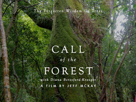 Watch: Call of the Forest