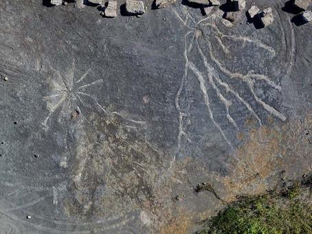 World's oldest fossilised trees