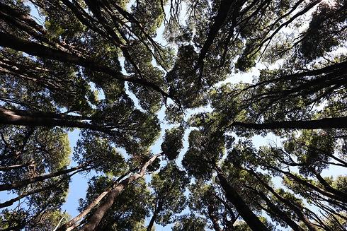 tree up view.jpg