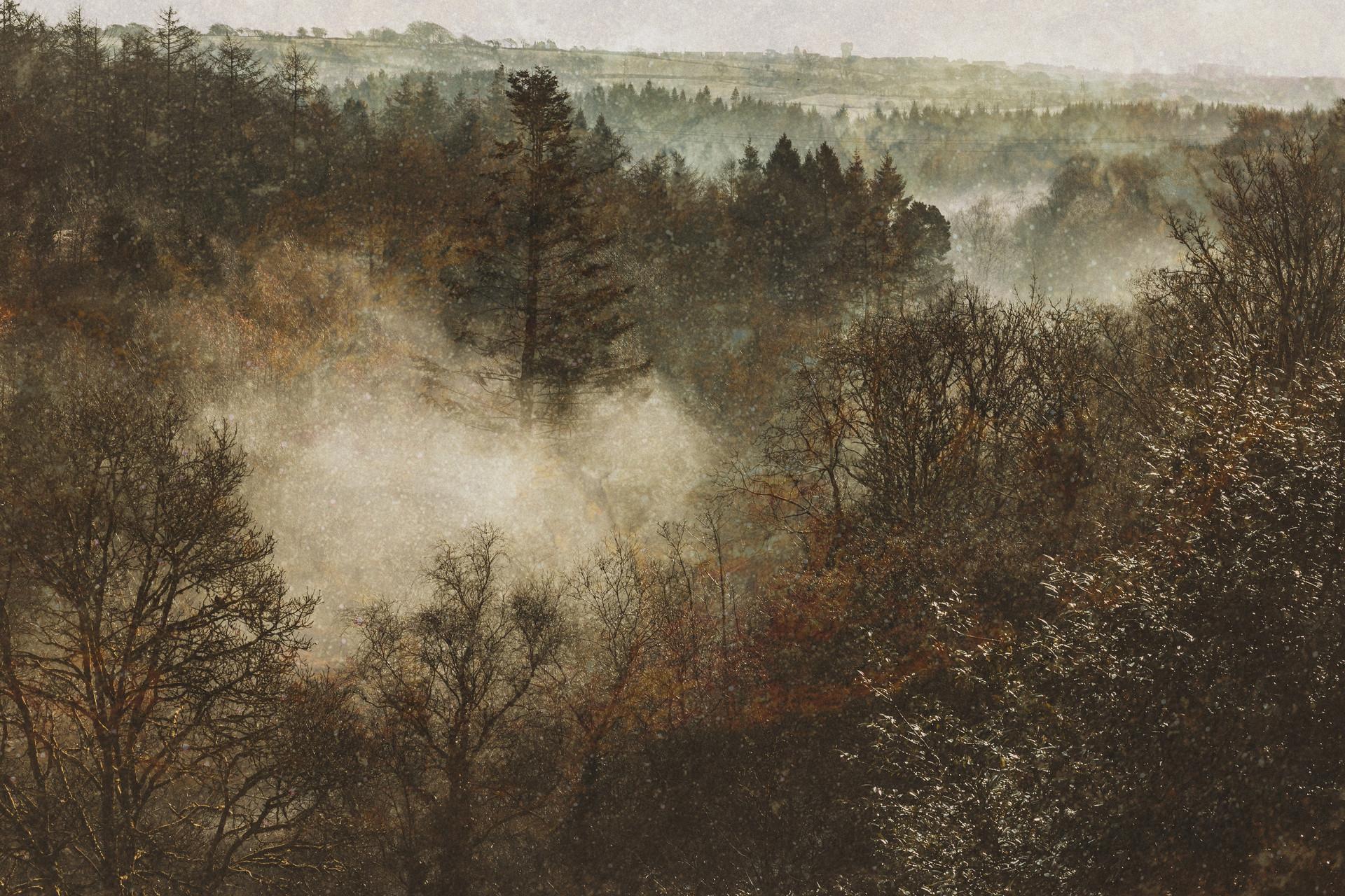 Pictorialist Penllergaer Woods.jpg