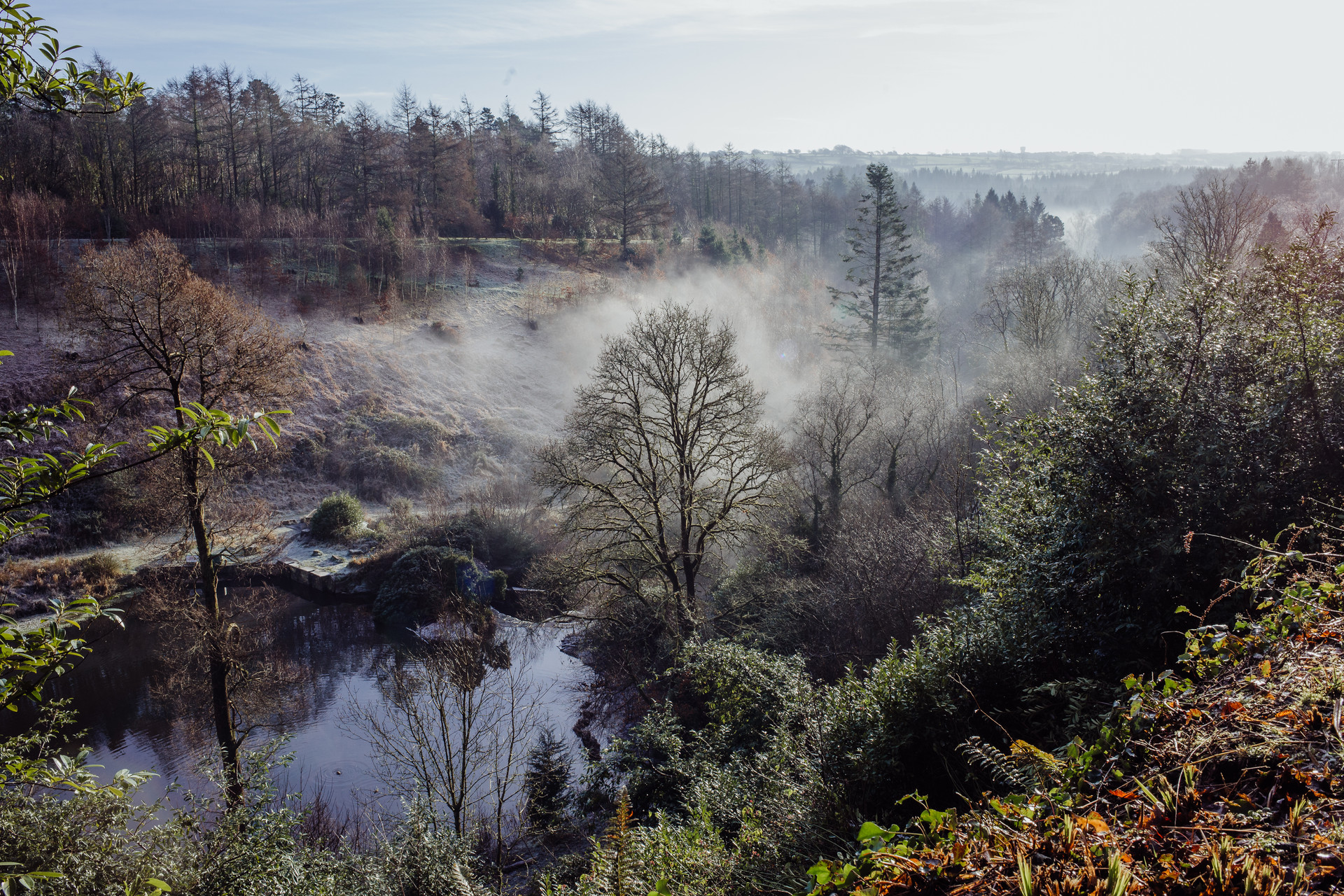 Misty morning in Penllergaer Woods.jpg