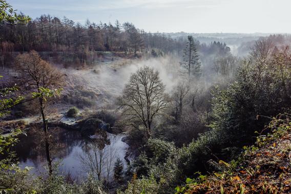 Misty morning in Penllergaer Woods.jpg