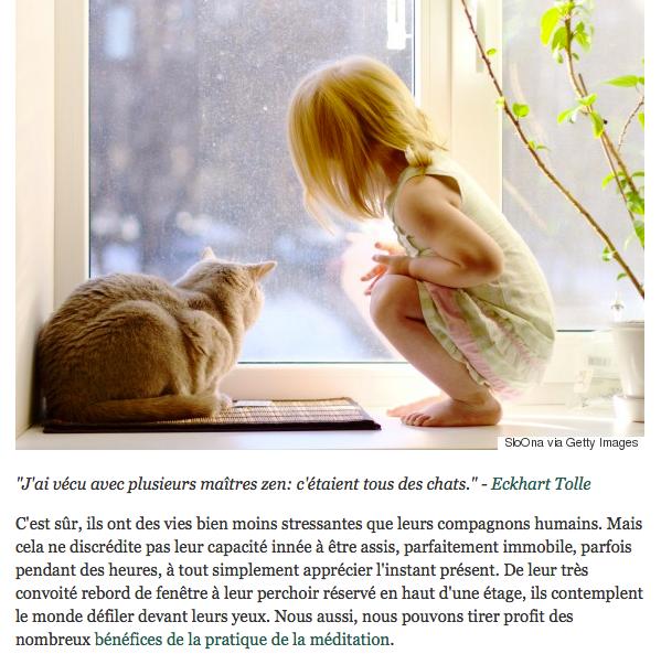 La leçon du Chat...