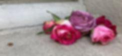 RoseFenetre.jpg
