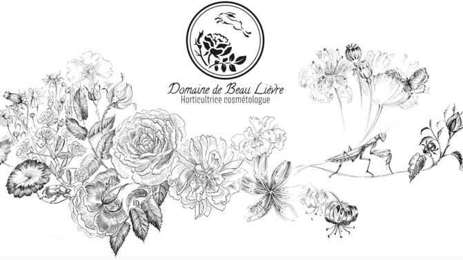 Les bienfaits de la Rose Centifolia