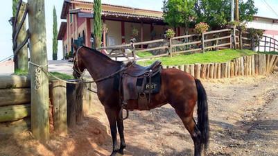 CAVALOS VINHOS MICHELETTO10.jpg