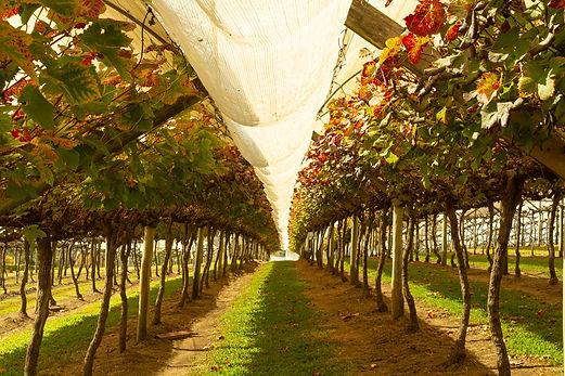 vinhos-micheletto-externo-10.jpg