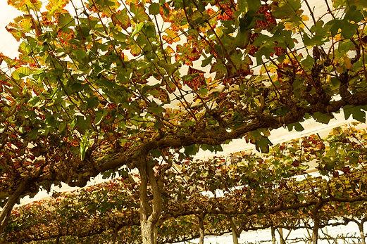 vinhos-micheletto-externo-12.jpg
