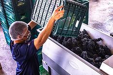 vinhos micheletto fazenda7.jpg