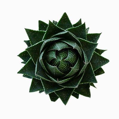 הווריטה לימיפוליה (ירוקה)