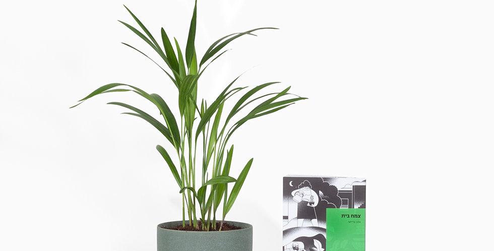 מארז צמח בית