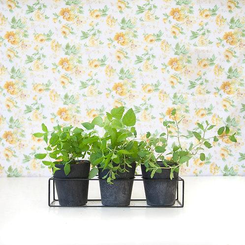 מארז תה   Plant Ti
