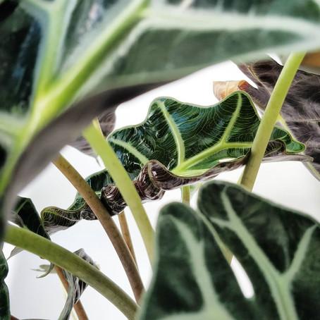 צמחימסטגרם