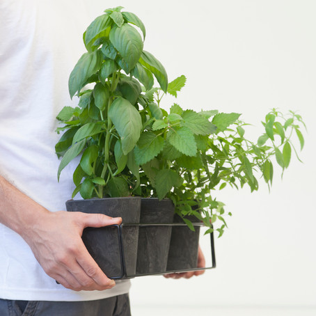 איך לגדל צמחי תבלין בבית