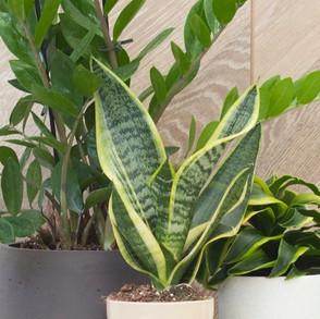 גם צמחים אוהבים להיות ביחד