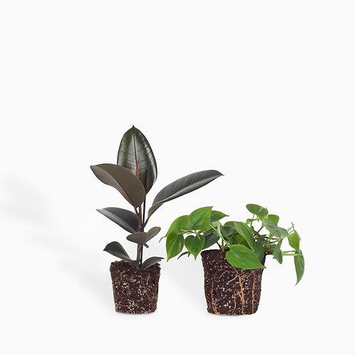 מארז ירוק שחור