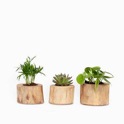 מארז שלושה צמחים בכלי עץ