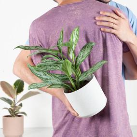 המתנה הכי טובה שיש צמח