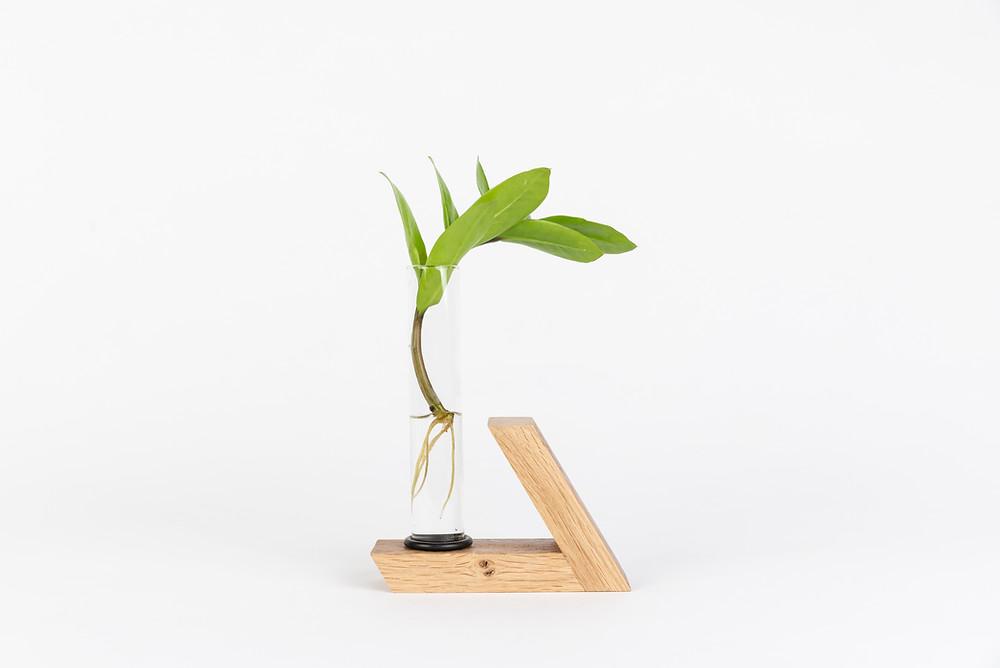 ייחור זמיה בכלי זכוכית. עיצוב: shinshin studio. צילום: Ran Ezra