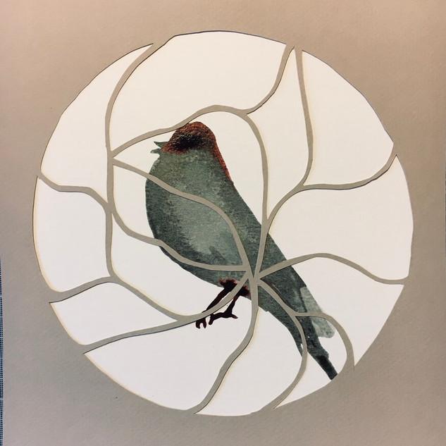 oiseau 10