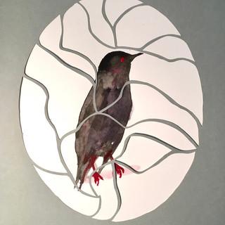 oiseau 8