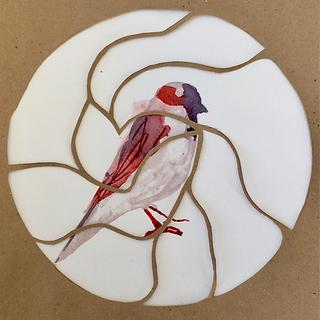 oiseau 4