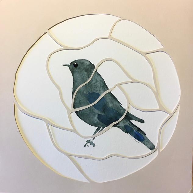 oiseau 7