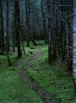 Stroll along the woodland trails.