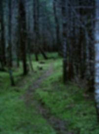 Inthestillness Retreat trails