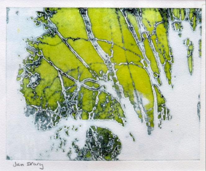 Jan Dury - Through the Trees