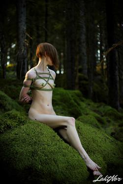 Belschen in the forest