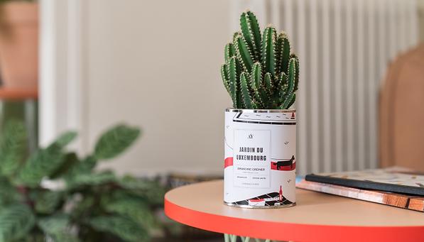 Ay-Cactus-1.png