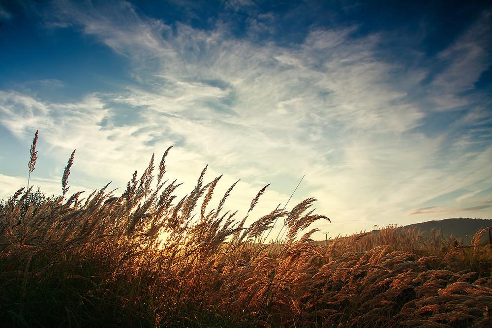 breath_of_wind_by_iustyn-d2wrgt9.jpg
