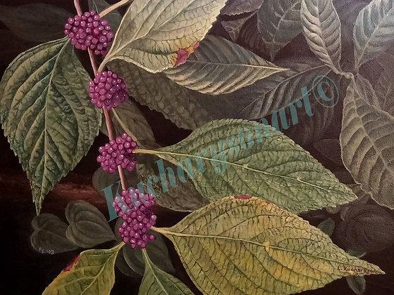 Americam Beauty Berries
