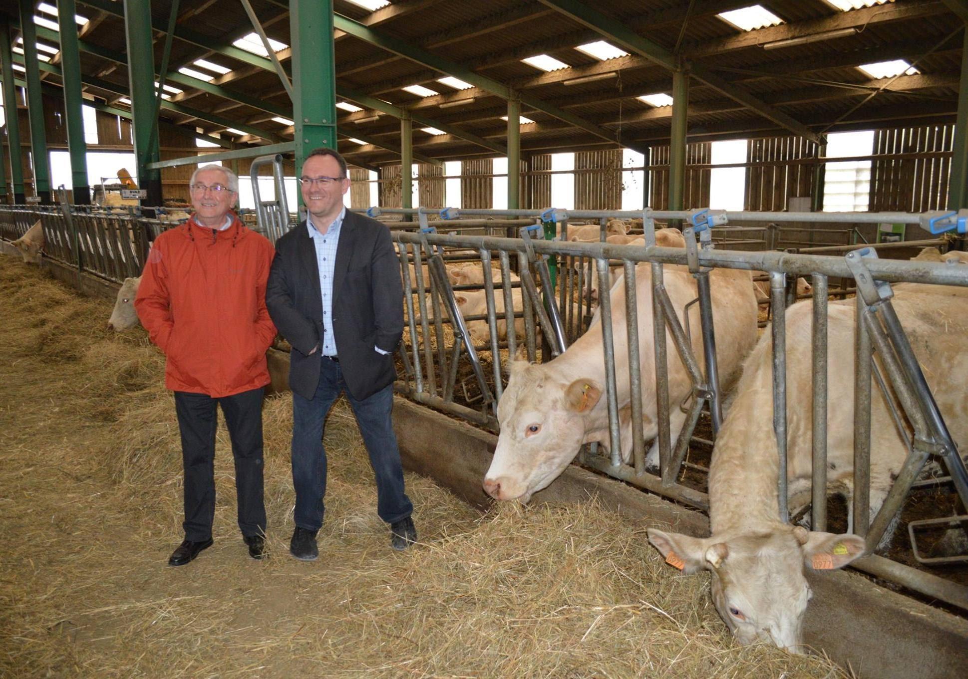 Agriculture - Avec des vaches