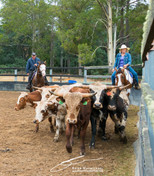 Gowrie Park Rodeo