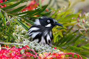20131113_New Holland Honeyeater_002.jpg