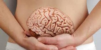 ventre deuxieme cerveau1.jpg