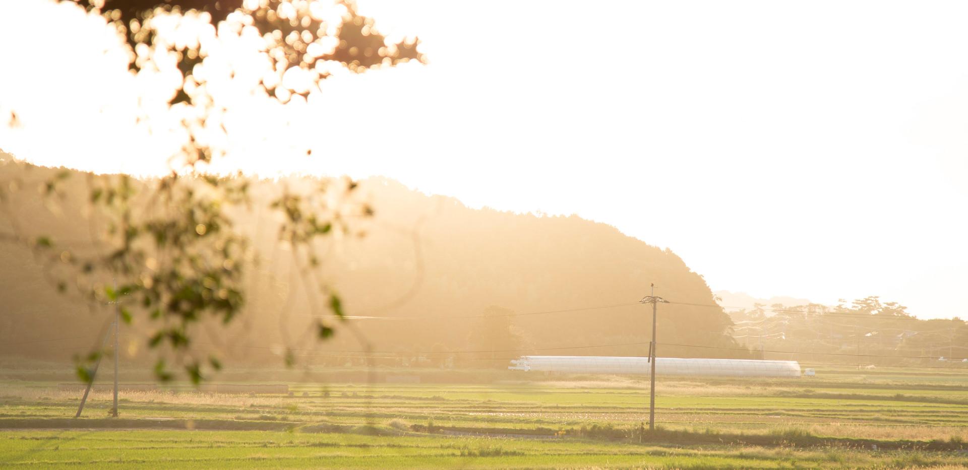 四季で色が変わる田園風景