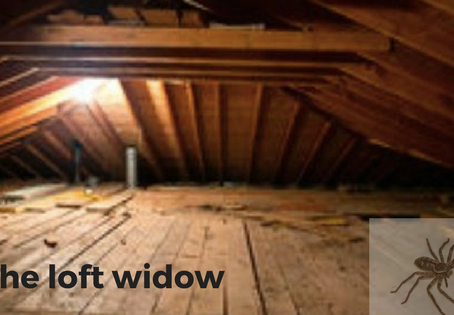 The loft widow