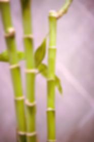 Yoga in Bryanston - bamboo
