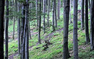 Yoga Bryanston woods